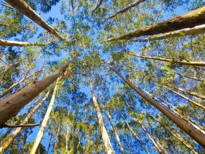 NUEVOS TEJIDOS: EUCALIPTO, tela fabricada a partir de la madera de eucalipto